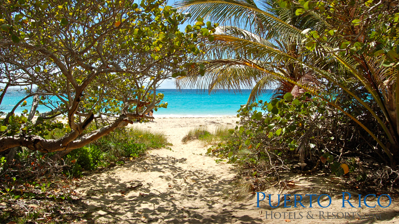 Hotels in Vieques Island Puerto Rico